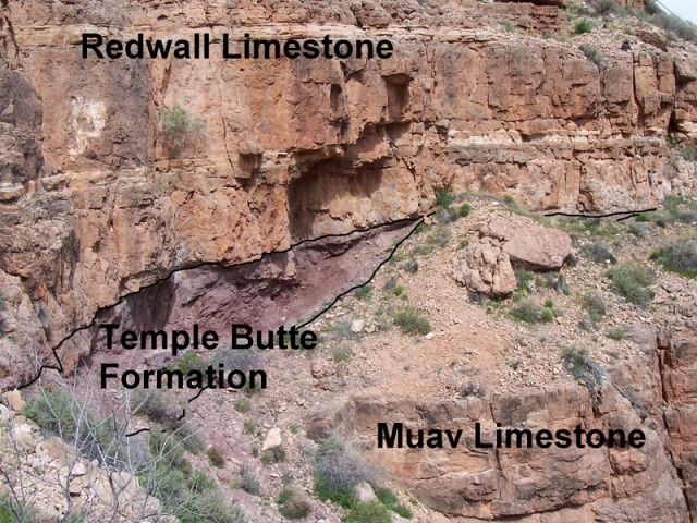 Temple Butte Limestone was deposited on the eroded surface of the Muav Limestone. It in turn was buried by Redwall Limestone. Source: Wikipedia