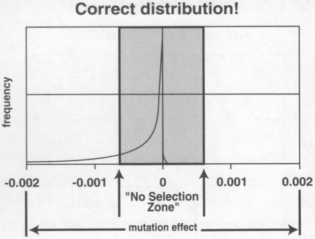 Mutation Distribution, from Genetic Entropy