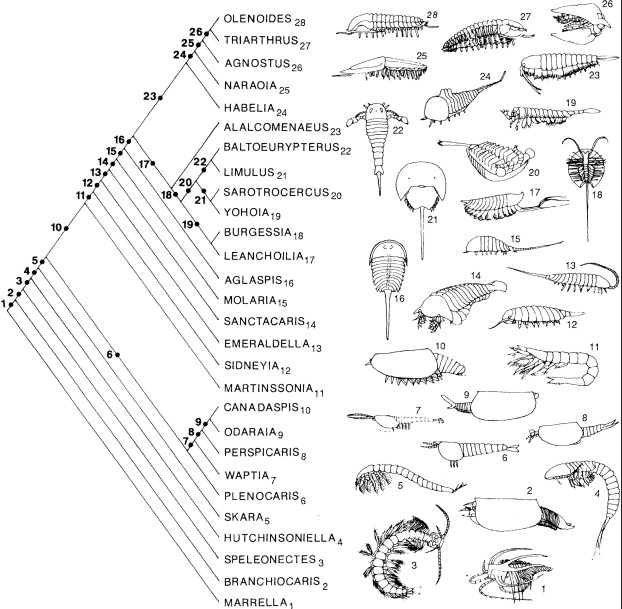 Briggs_Fortey_1989_arthropod_evolution_cladogram