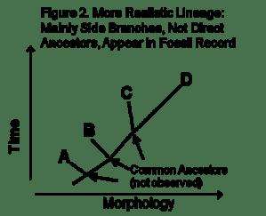 Figure 2-Evol Lineage