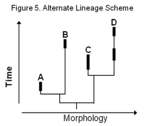 Figure 5-Evol Lineage
