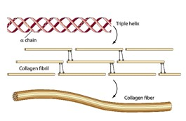 """Source: Fazale Rana, """"Structure of Dinosaur Collagen Unravels the Case for a Young Earth"""", Reasons to Believe, August 10, 2011."""