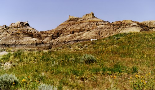 The dark band in this photo (indicated by the white arrow) is the Z-coal, marking the top of the Hell Creek formation in Montana. Source: Museum of Paleontology, U.C. Berkeley http://www.ucmp.berkeley.edu/mesozoic/mesozoic.php