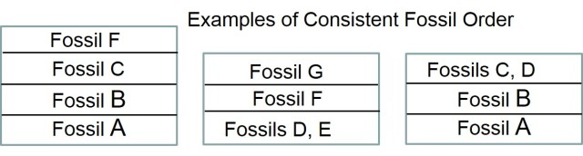 Examples of Fossil order