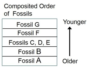 Fossil order in rocks