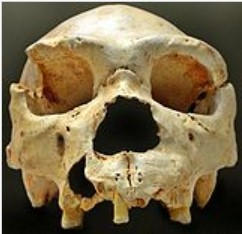 """Homo heidelbergensis Cranium 5"" was discovered in the Sima de los Huesos, Atapuerca (Spain).        Source: https://en.wikipedia.org/wiki/Atapuerca_Mountains"