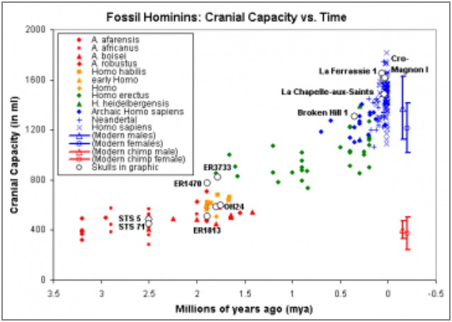 "Ages and cranial capacity data: C. De Miguel and M. Henneberg (2001). ""Variation in hominid brain size: How much is due to method?"" Homo 52(1), pp. 3-58. Cranial capacity of modern humans: McHenry et al. (1994). ""Tempo and mode in human evolution."" Proceedings of the National Academy of Sciences, 91:6780-6. Graphic by Nick Matzke, National Center for Science Education.    Source:   ""Transitional Fossils Are Not Rare"", NCSE on line. September 25th, 2008. http://ncse.com/creationism/analysis/transitional-fossils-are-not-rare"