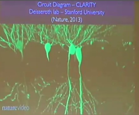 "Screen shot of ""CLARITY"" visualization video of neural connections in mouse brain. From William Newsome presentation ""Of Two Minds: A Neuroscientist Balances Science and Faith"" at American Scientific Affiliation 2016 meeting. From http://network.asa3.org/"