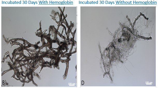 Ostrich Vessels with_out Hemoglobin